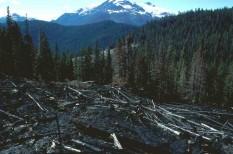 erdő, erdőirtás, fakitermelés