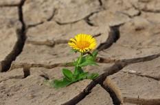 globális felmelegedés, klímaváltozás, mezőgazdaság, szélsőséges időjárás