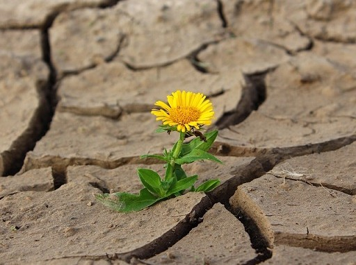 egyre melegszik a föld, egyre több lesz a természeti katasztrófa