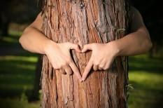 erdő, fenntarthatóság, környezetvédelem