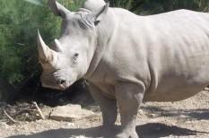 állatvédelem, biodiverzitás, tömeges kihalás