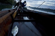 balaton, halászat, túlhalászat