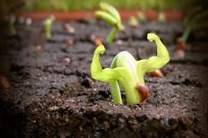 eu, hatóság, növényvédő, szabályozás, vis maior