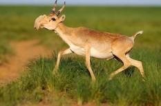 állatvédelem, környezetvédelem, tömeges kihalás