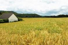 globális felmelegedés, klímaváltozás, mezőgazdaság