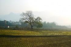 agrárhitelezés, jégkár, mezőgazdaság