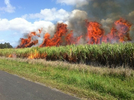 lángoltak a földek és az erdők