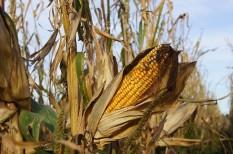 gabonaárak, gabonapiac, infláció, mezőgazdaság