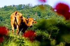agrár-kárenyhítés, agrárbiztosítás, agrárium, biztosítás, díjtámogatott biztosítás, egységes kérelem, kárenyhítés, költségkímélés, mezőgazdaság, mezőgazdasági biztosítás