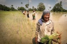 éghajlatváltozás, élelmiszerbiztonság, kávé, klímaváltozás, krízis és túlélés