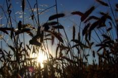 agrár politika, agrártámogatás, dancsó, közös agrárpolitika, mezőgazdaság, nak, támogatási kérelem