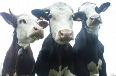 adó, állattenyésztés, chipsadó, cigaretta, cukor, dohányipar, fogyasztás, húsipar, hústermelés, kalória, környezetvédelem, metán, ökolábnyom, szarvasmarha, takarmány, víz, vízlábnyom