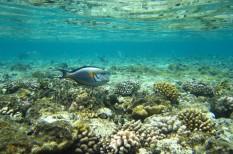 éghajlatváltozás, globális felmelegedés, klímaváltozás, korallsziget, korallzátony, óceán, oxigén, savasodás, savasodó tenger, szén-dioxid, tenger, üvegházgáz