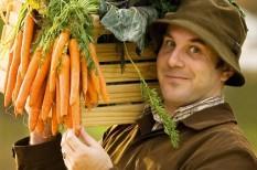 agrárium, fenntarható fejlődés, fenntartható mezőgazdaság, fenntartható termelés, közösségi gazdaság, közösségi termelés, mezőgazdaság