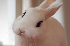 állattartás, élő nyúl, háziállat, húsvét, nyúl