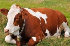 agrárkamara, állattenyésztés, tejtermelők