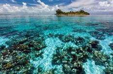 fajpusztulás, korall, környezetvédelem, óceán