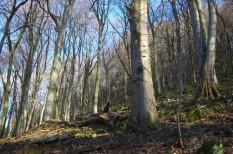erdőirtás, környezetvédelem, mesterséges intelligencia