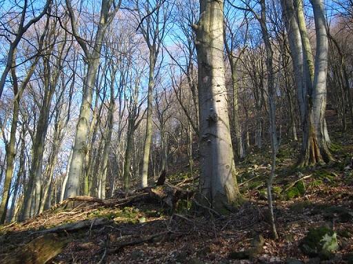 veszélyben az erdők