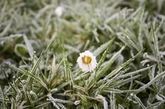 fagykár, mezőgazdaság, szélsőséges időjárás