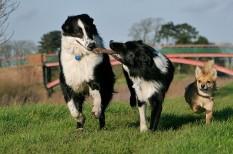 állattartás, induló vállalkozás, marketing