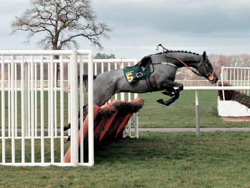 ló átugrat egy akadályt