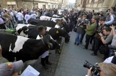 agrártámogatások, mezőgazdaság, tejtermelők, uniós pénzek, uniós szabályozás