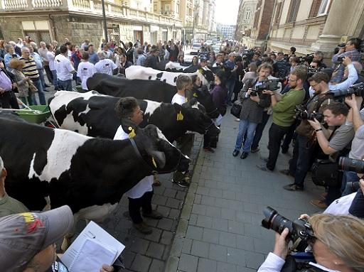 tehenek budapesten