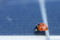 környezetvédelem, megújuló energia, méhek, napenergia