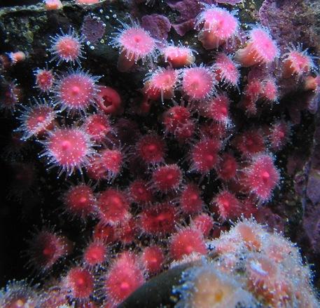 Kifakulhat (fotók: freeimages.com)