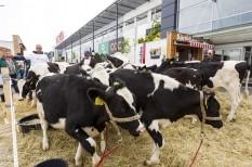 adócsalás, adócsökkentés, áfacsalás, áfacsökkentés, állattenyésztés, élelmiszeripar, mezőgazdaság