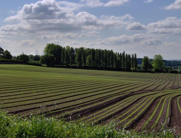 Termőföld. De kinek terem a termés? (fotó: freeimages.com)