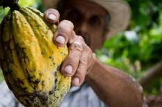 digitális írástudás, fairtrade, fenntartható fejlődés, fenntartható mezőgazdaság, kakaótermesztés, méltányos kereskedelem, tudatos fogyasztás