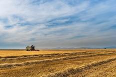 agrár, agrárinformatika, agrártámogatás, mezőgazdaság, precíziós gazdálkodás