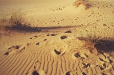 homok, kalóz, olaj, sivatag