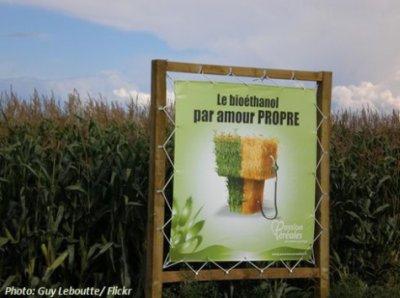 Itt nem az élelmiszerpiacra termelünk (fotó flickr)