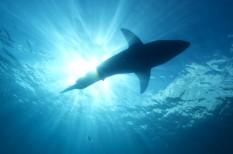 állatvédelem, halászat, korall, környezetvédelem, túlhalászat