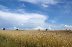 kenyér, megújuló energiaforrás, táplálkozás, tritikálé