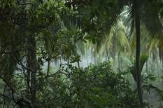 amazonas, brazília, emissziócsökkentés, emissziómérséklés, erdőirtás, erdőtelepítés, klímaerdő, klímapolitika, környezetvédelem, párizsi klímaegyezmény, új-zéland