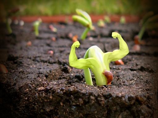 izmos hajtás bújik ki a földből