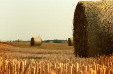 agrárium, beruházás, hatékonyságnövelés, mezőgazdaság, versenyképesség