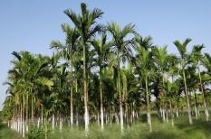 élelmiszeripar, fenntartható mezőgazdaság, fenntarthatóság, környezetvédelem, pálmaolaj
