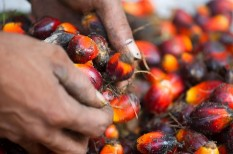 élelmiszeripar, fenntartható fogyasztás, fenntartható gazdálkodás, klímaváltozás, pálmaolaj