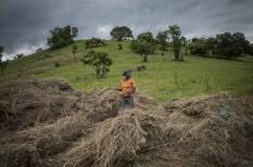 ensz, fao, gazdák, mezőgazdaság, mezőgazdasági felmérés, összeírás