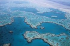 korall, koralltelep, nagy-korallzátony, óceán, természetvédelem, világörökség