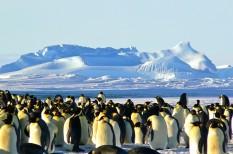 antarktisz, ásványkincs, fenntarthatóság, ivóvíz, környezetvédelem