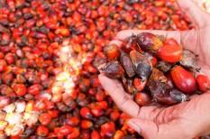 agrárium, beszállítói lánc, csokoládé, emisszió, erdőirtás, fenntartható, környezetvédelem, mezőgazdaság, nestle, növénytermesztés, olajpálma, őserdő, pálmaolaj, unilever
