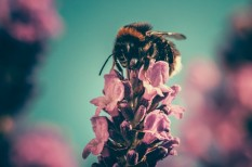 méhek, méhpusztulás