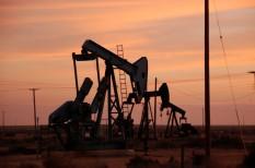 befektetési alap, egyetem, felelős befektetés, fosszilis energiahordozó, kőolaj, olajipar, részvényes