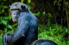 állatvédelem, fenntarthatóság, környezetvédelem, veszélyeztetett faj